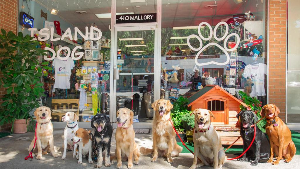 cửa hàng thú cưng gò vấp