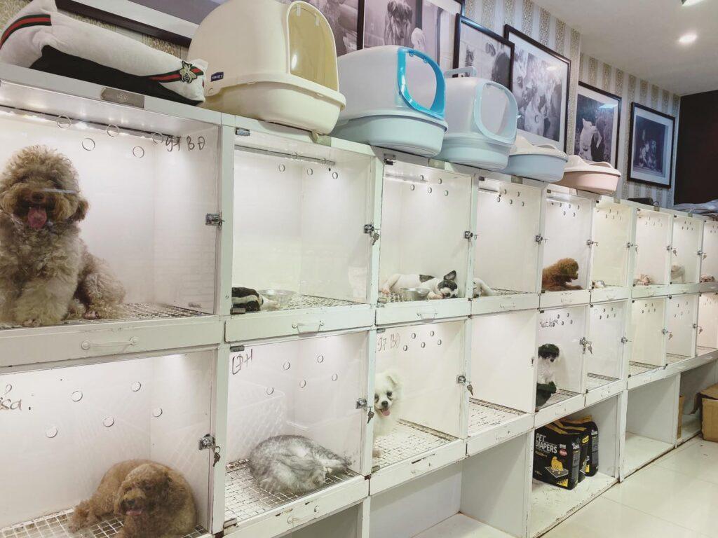 cửa hàng chó mèo ở hải phòng